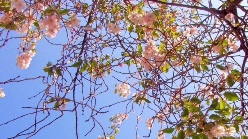 Пролетта вече е тук. Честита Първа пролет!