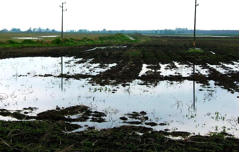 Повече от 5000 декара земеделски площи