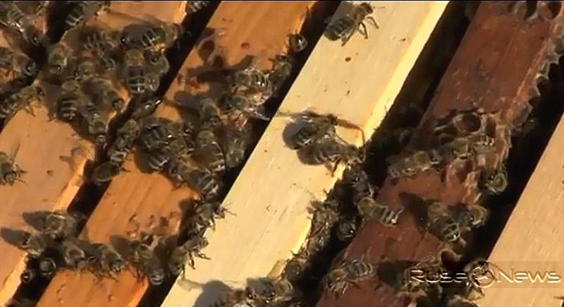 възможностите за развитие на успешно пчеларство
