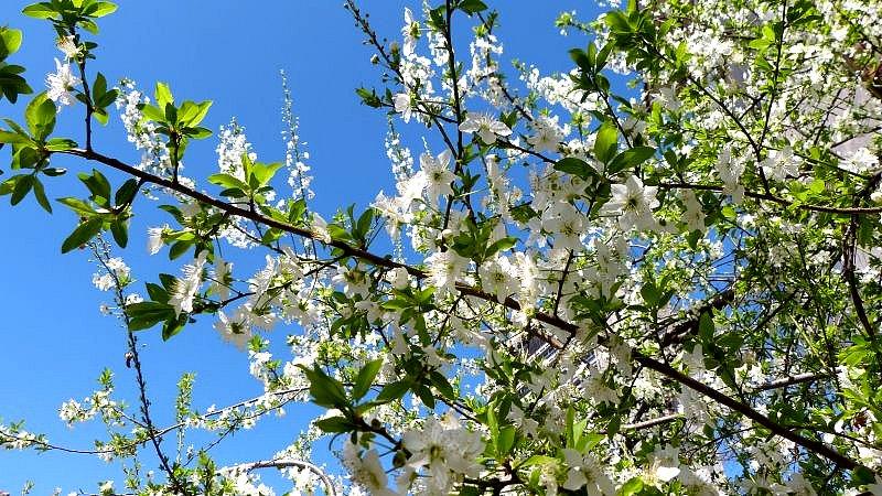 Пролетта настъпва, температурите се повишават