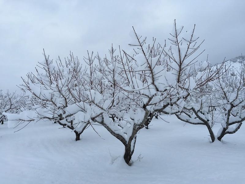 Овошките в районите на Русе и Силистра