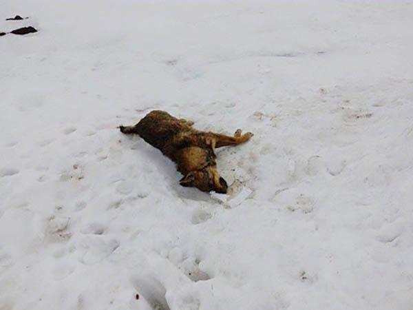 тровене на бездомни кучета