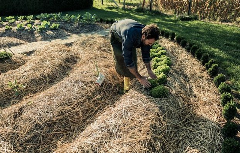 пермакултурното земеделие