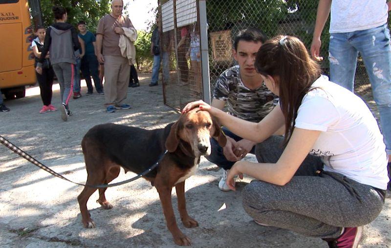 Увеличават се осиновените животни в Русенско