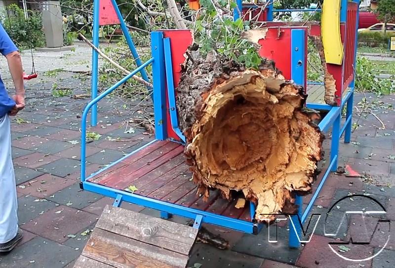 дървета и електрически стълбове