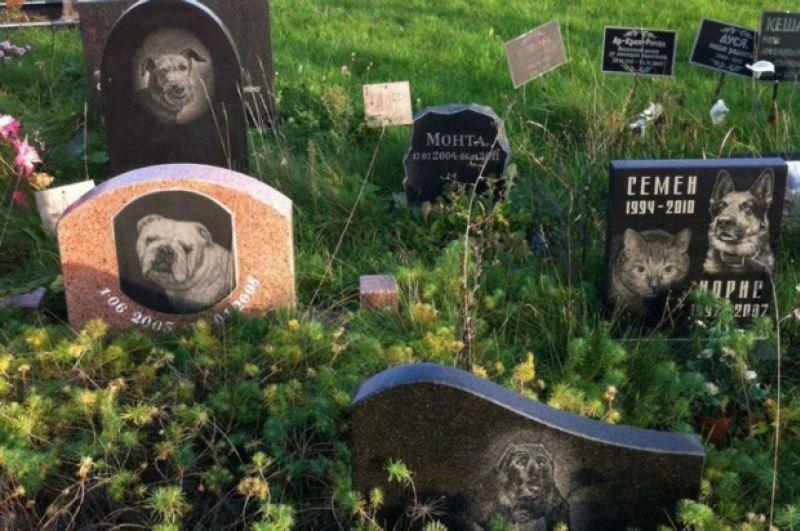 гробище за домашни любимци.