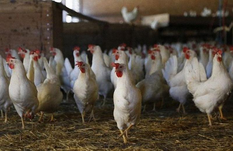 забраната за продажба на птици по пазарите