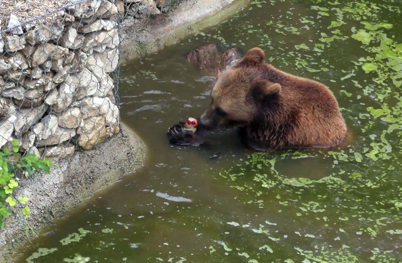 """Малки еколози """"подсладиха"""" ежедневието на мечките"""