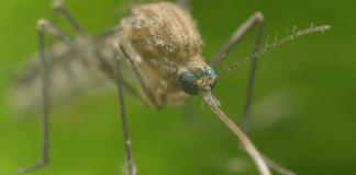 Разработиха план за елиминиране на комарите в световен мащаб