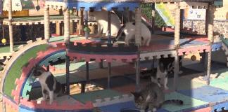 """""""Мяу парк"""" за 100 000 бездомни котки в Турция"""