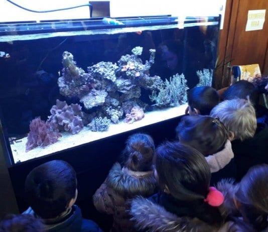 Морски аквариум посреща