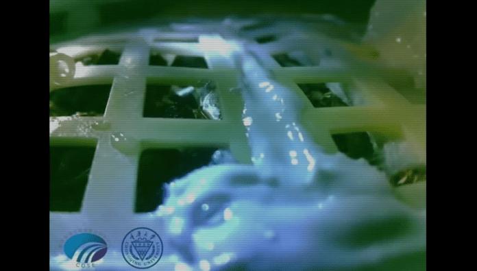 Първите семена покълнаха на Луната