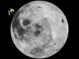 Какво се случи с покълналия памук на Луната?