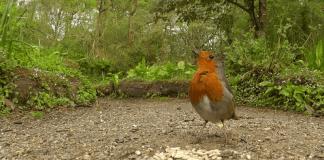 Учени показаха света през очите на птиците