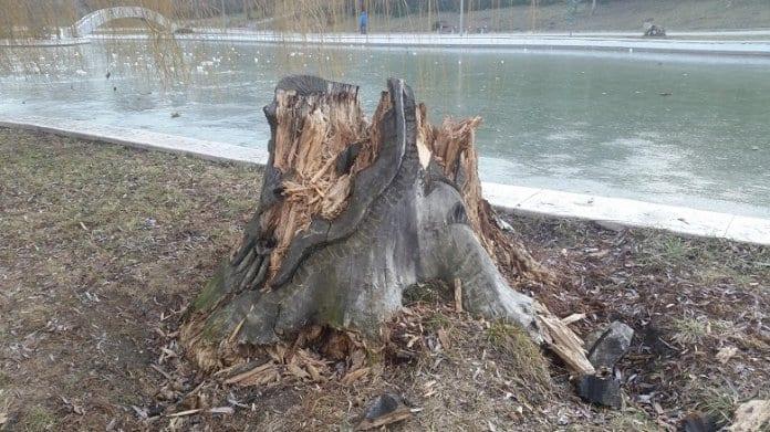 Вандали направиха уникални дърворезби