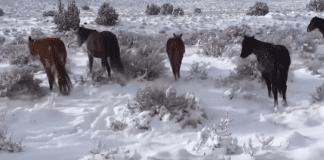 В Лас Вегас валя сняг