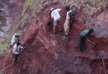 Откриха скелет на динозавър до река в Танзания