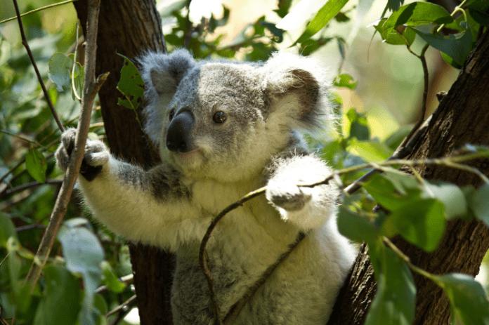 Дронове с точност броят коали