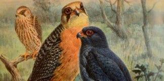 """""""Птиците в изкуството и цар Фердинанд I"""""""