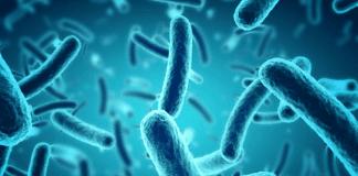 Откриха бактерии, хранещи се с петрол в Марианската падина