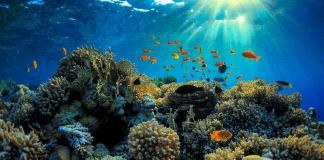 Тревожна аномалия с Големия бариерен риф