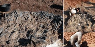 Палеонтолози откриха динозавърско гробище на 220 млн. години