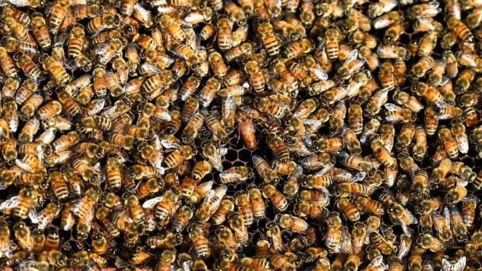 80 000 bees