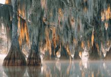 Учени откриха дърво на 2624 години