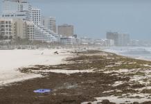 Мексикански плажове затъват в кафяви водорасли