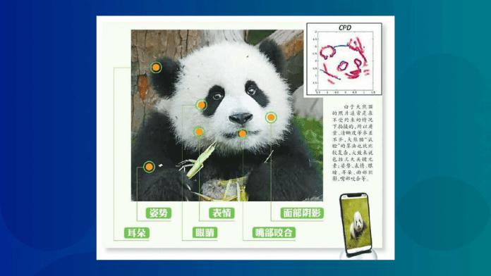 panda facial recognition