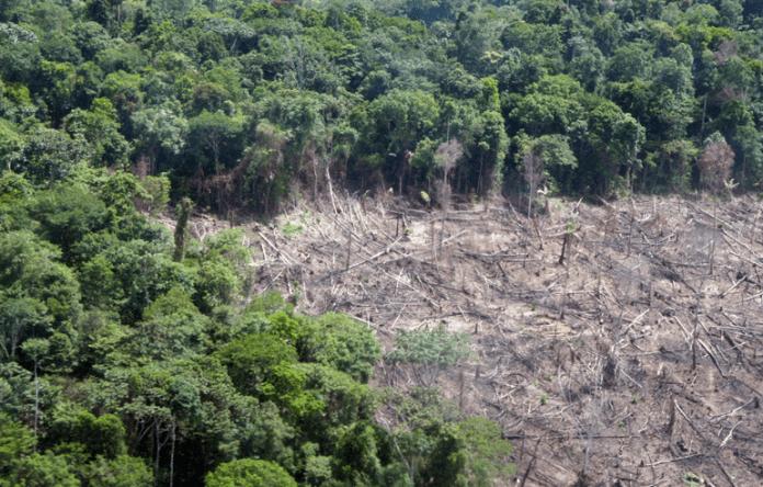 Унищожени са 12 милиона хектара тропически гори през 2018 година