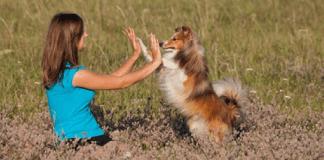 """Учени: Кучетата се """"заразяват"""" от стреса на стопаните си"""