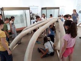Ученици строиха колиба от макети на мамутски кости