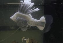Създадоха риба робот, захранвана с изкуствена кръвоносна система