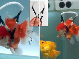 Мъж сглоби инвалидна количка за златната си рибка