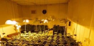 фабрика за марихуана