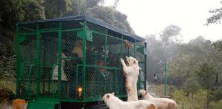 Зоопарк наопаки в Китай