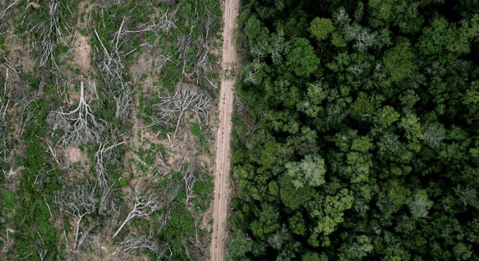 NASA: Дъждовните гори на Амазонка изсъхват