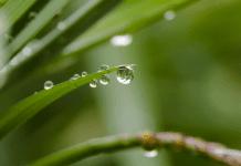 Растенията могат да изпадат в паника