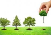 Деца от Русе ще засадят над 2000 нови дръвчета