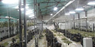 Оранжерия с марихуана за над 1 млн. лв.
